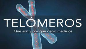 que son los telomeros